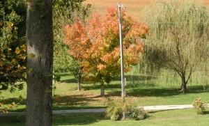 Fall_foilage2